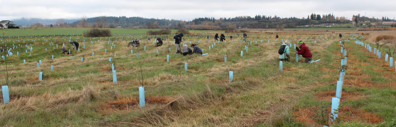 Many volunteers doing restoration planting work in field. Lots of blue tree planting tubes in the foreground and a faint mountain scene in the background.